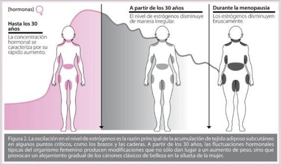Resultado de imagen de sistema hormonal  y menopausia